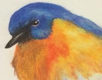 Bird- Pastel Painting