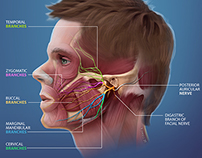Medical Interactive: E-Learning module for students