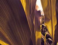 Corn field tribute to ImagezNL