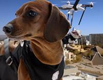 Humane Society: Same Day Pups