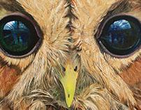Tawny Owl - 2016