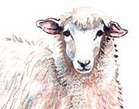 Lamb - Watercolor painting
