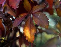 Russet Autumn