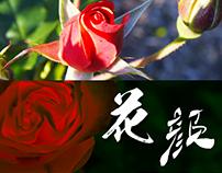 花颜|Flower Portraits