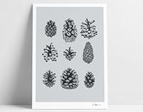 pine cone study