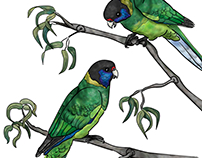 """Twenty-eight"" Parrots"