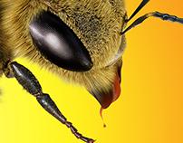 Bee for MAKRO
