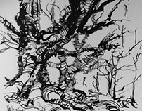 Sketch of trees in a forest