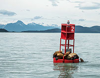 Landscapes and Wildlife of Juneau, AK