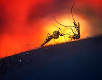 Bahubali , mosquito version