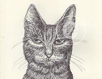 BALLPEN CATS