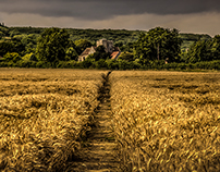 Three crops, Boughton Lees, Kent