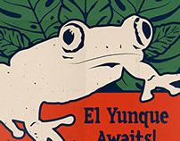 El Yunque Awaits