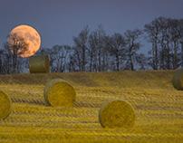 Harvest came late in Alberta
