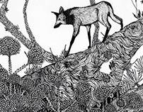 Lobo Guará em campo rupestre