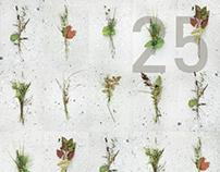 FESTIVAL DES COULEURS (poster)