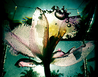 UNDER THE WATER - ORQUIDEA