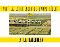 Campo Líder Trigo 2014 - Nidera Semillas