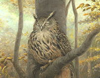 Sleeping owl in a beech forest