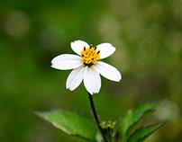 World of tiny flowers through lenses