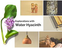 Explorations with Water Hyacinth