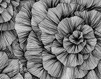 line::texture