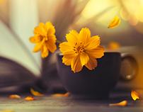 Flower Stories 2