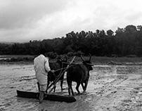 Malenadu; an indigenous