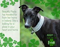 Adopt Dog - Volunteer Work
