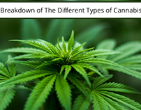 The Different Types of Cannabis | Cameron Forni