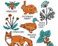 Detroit Flora & Fauna