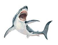 Shark_01