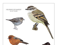 Digital Illustration - Biology