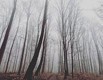 Freezy, foggy... February