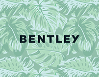 Bentley Spring Break Campaign | Art Direction