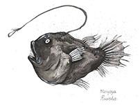 Deep ocean fish. Inktober 2017