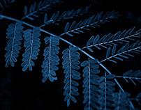 Cyanotype Photography [pt.24]