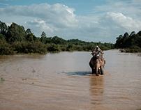 Elephant - Buon Ma Thuot, Vietnam
