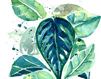 Tropical Leaves Watercolor Illustration