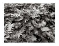 Eric Copeman - Leaf Clusters