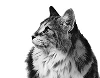 Animals - Labyes Protech - Labyderm