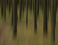 Blur in the forest