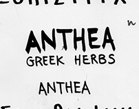 ANTHEA (Illustrations)