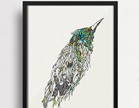 Pássaro  |  Bird