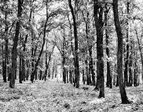 In the black and white forest