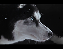 Northern Illinois University | Huskies Never Quit
