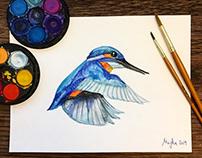 Kingfisher - 2019