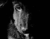 Dog,My Puppy