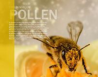 Antennae Magazine
