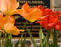 Through the Tulips & Daffodils 2015